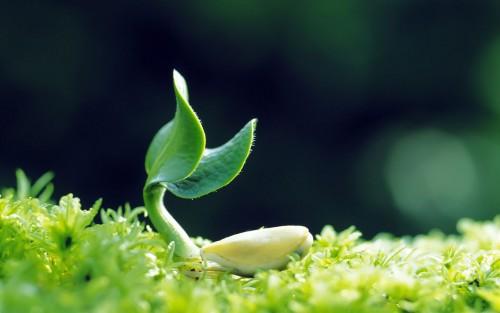 seed (10)